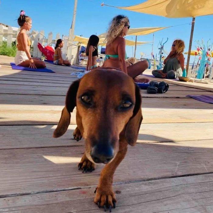 Festival dello Yoga al Baubeach: il programma della giornata