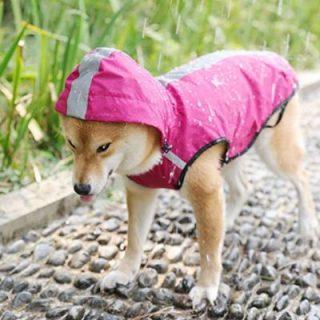 Cappottino catarifrangente per cani in offerta su Amazon