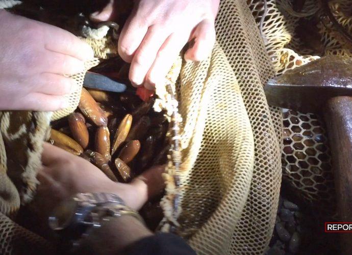 Arresti a Napoli per pesca illegale di datteri